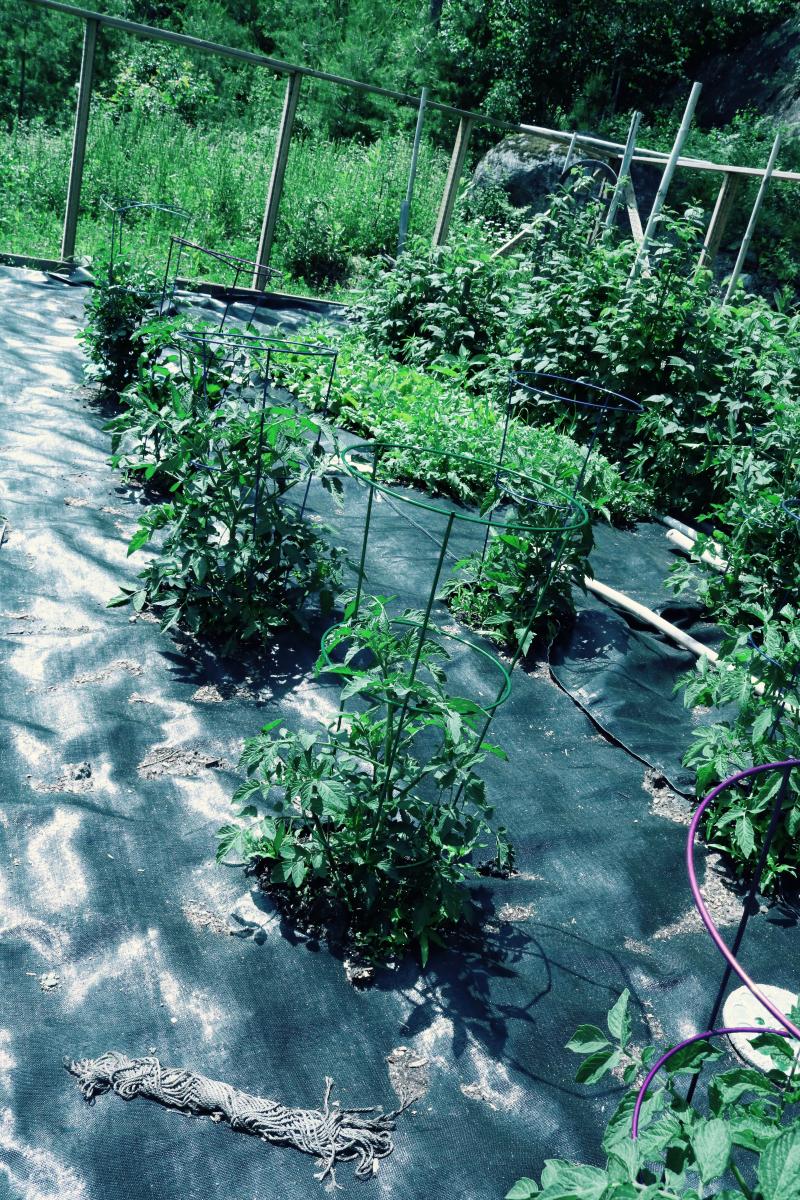 June Garden - 3