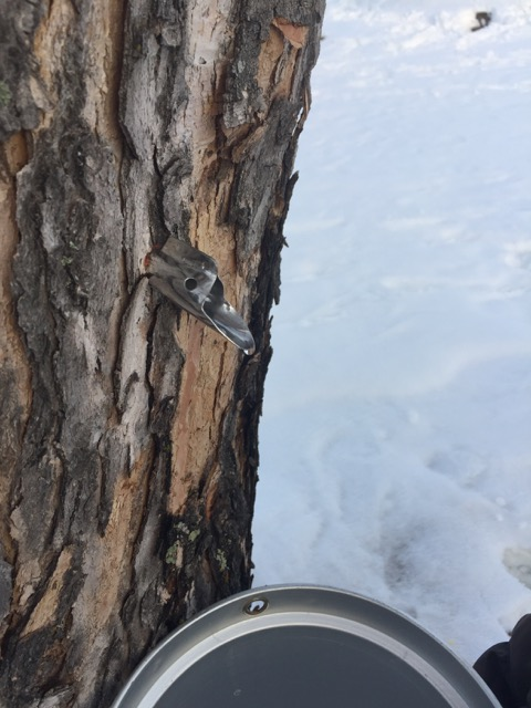 Maple Syrup Season - 5