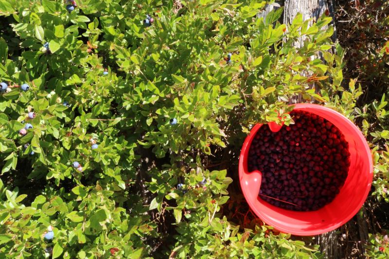 Berries - 15