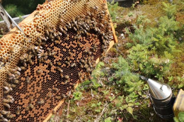 Beekeeping August - 3