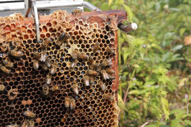 Beekeeping August - 2