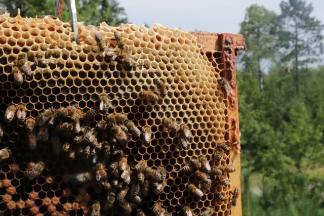 Beekeeping August - 4
