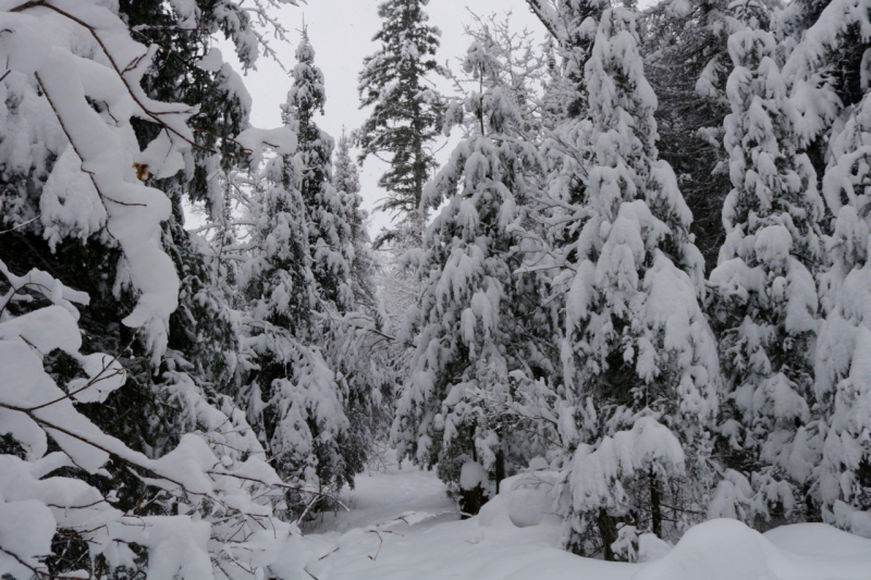 Snow Day - 7