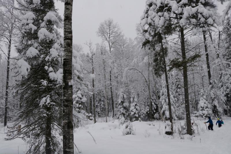Snow Day - 14