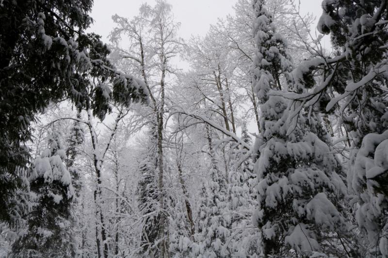 Snow Day - 16