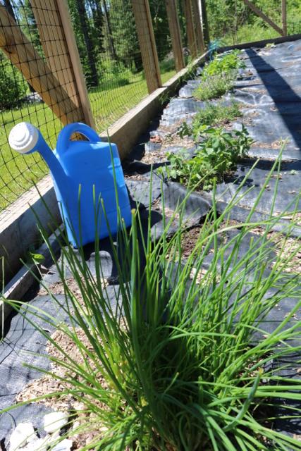 June in my garden - 1
