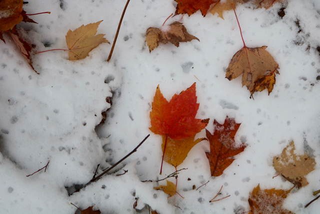 First Snow - 9
